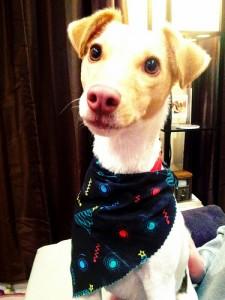 Milo Dog
