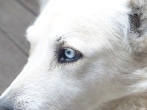 dog-186224_640