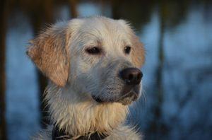 History of the Dog Name – Elsa | 99 Dog Names